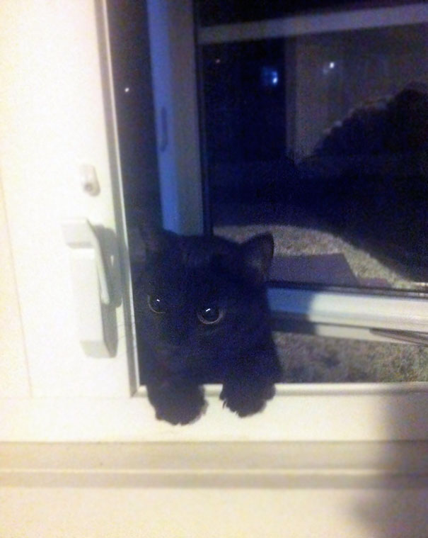 Had My Window Open To Have A Smoke When I Suddenly Heard Meowing. Turned Around To See This Guy