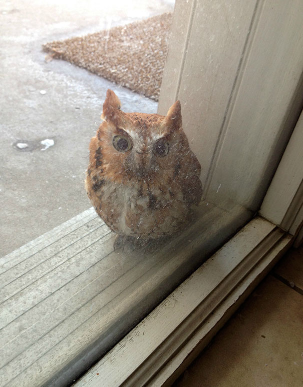 My Brother Said He Heard A Boop Against The Window. Found This Little Guy