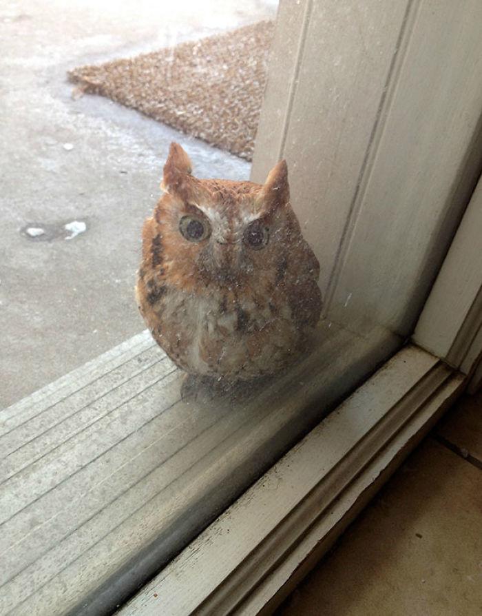 Escuché un golpecito en la ventana y...