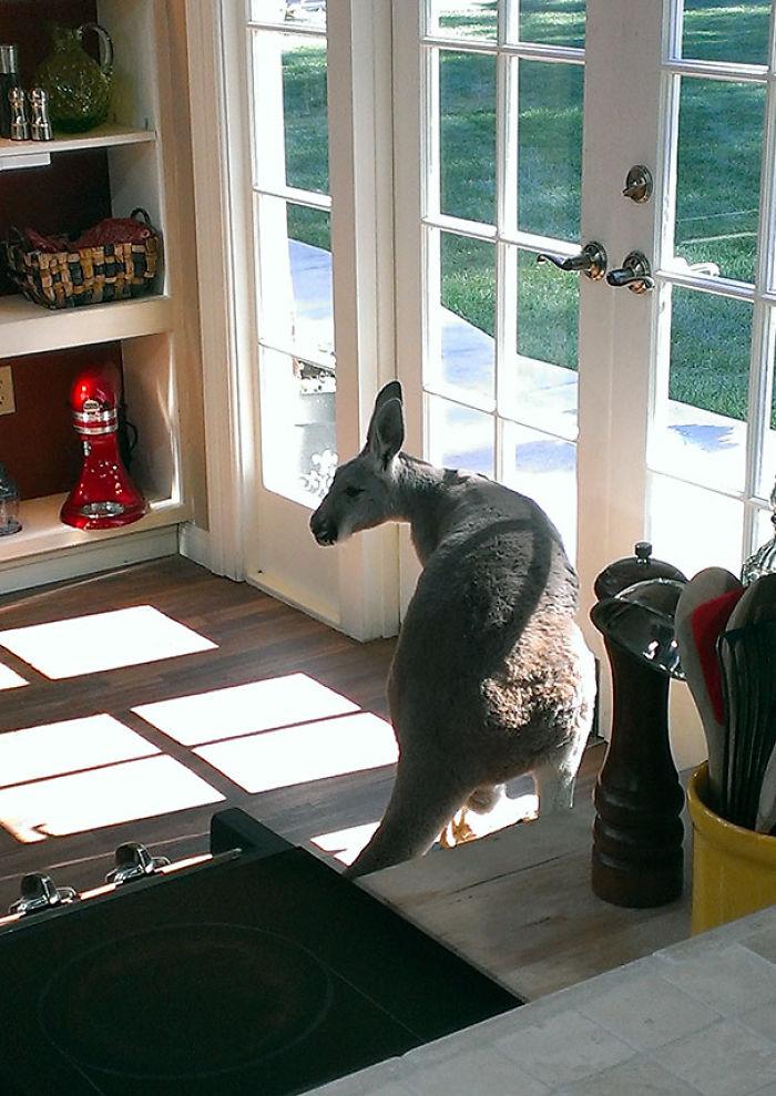 Oí un ruido en la cocina y me lo encontré dando saltitos