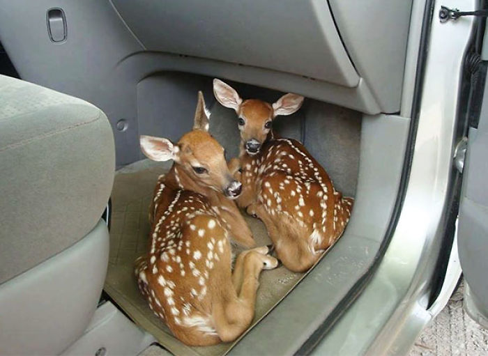 Dejé abierta la puerta del coche porque iba muy cargado. Al volver para cerrarla...
