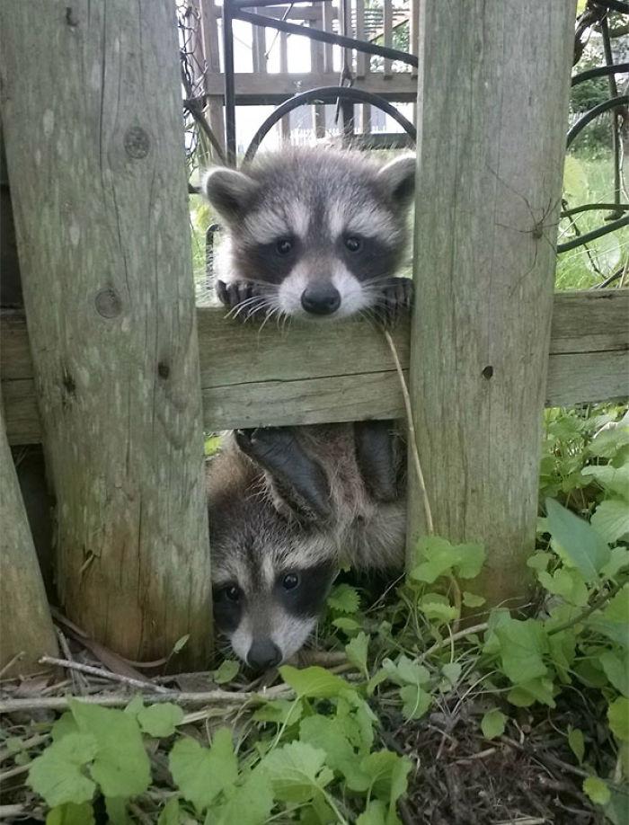 Me acabo de mudar y han venido los vecinos a saludar