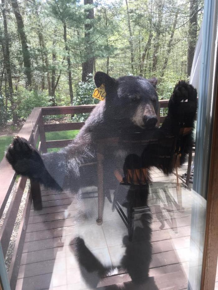bear-smells-brownies-wants-get-inside-house-5