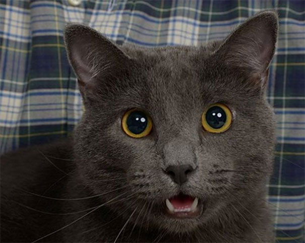 Guy Gets Professional Pictures With His Cat And They End Up - Guy gets professional photoshoot with his cat engagement photos