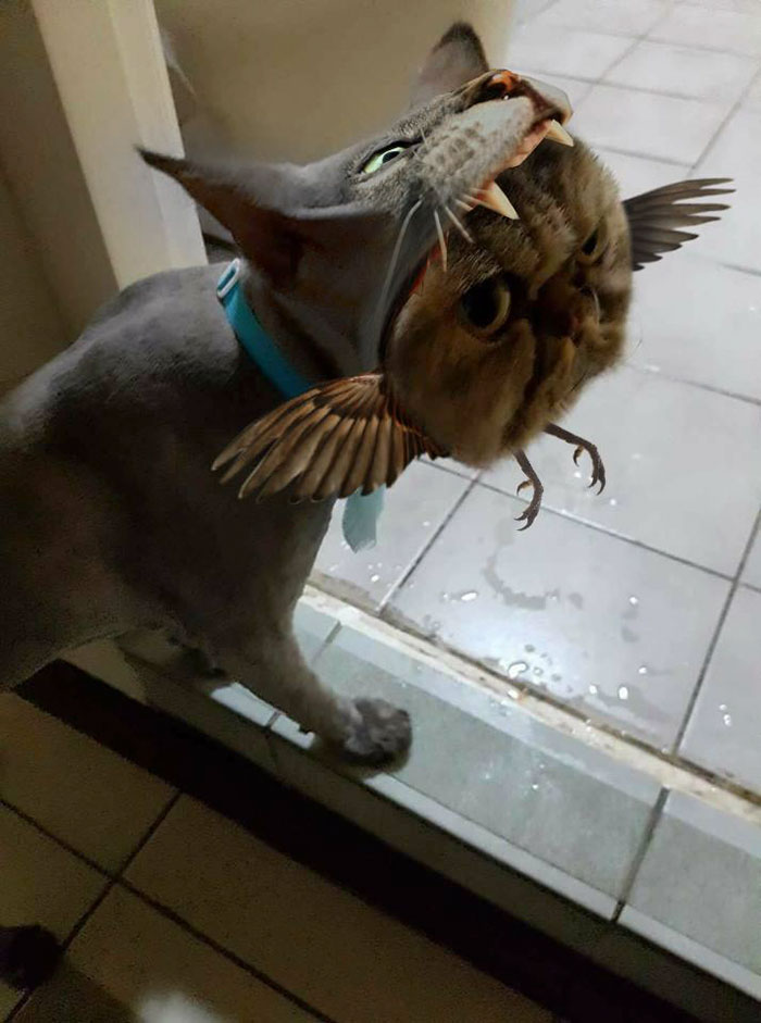 cat-hairdresser-fail-jin-jin-11