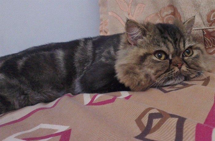 cat-hairdresser-fail-jin-jin-12