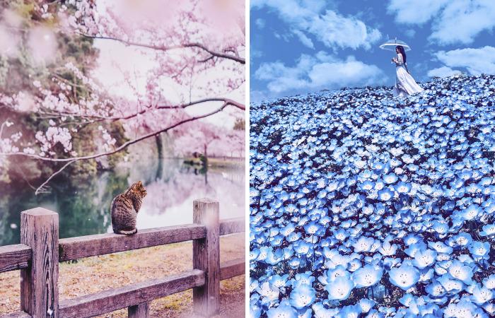 Compré billetes a Japón durante la floración de los cerezos y acabé en un cuento de hadas