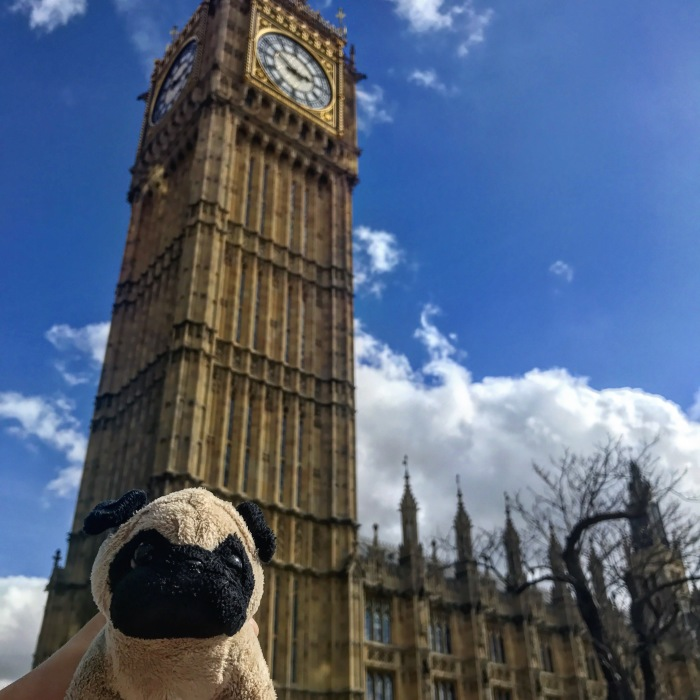 Meet Mr. Pug, The Traveling Toy Dog Exploring The World