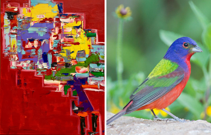 Colorful Birds Of The World