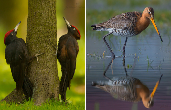 I Photograph Polish Birds