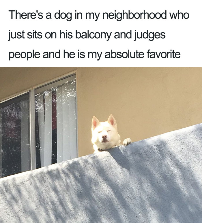 10+ Of The Happiest Dog Memes Ever That Will Make You ...  |Cute Smile Memes