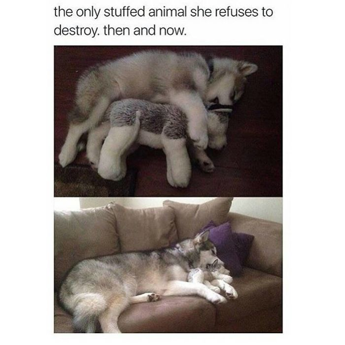 271 Of The Happiest Dog Memes Ever That Will Make You ...  |Cute Smile Memes