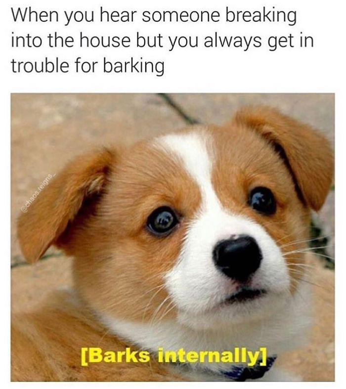 My Dog Barks When I M Not Home