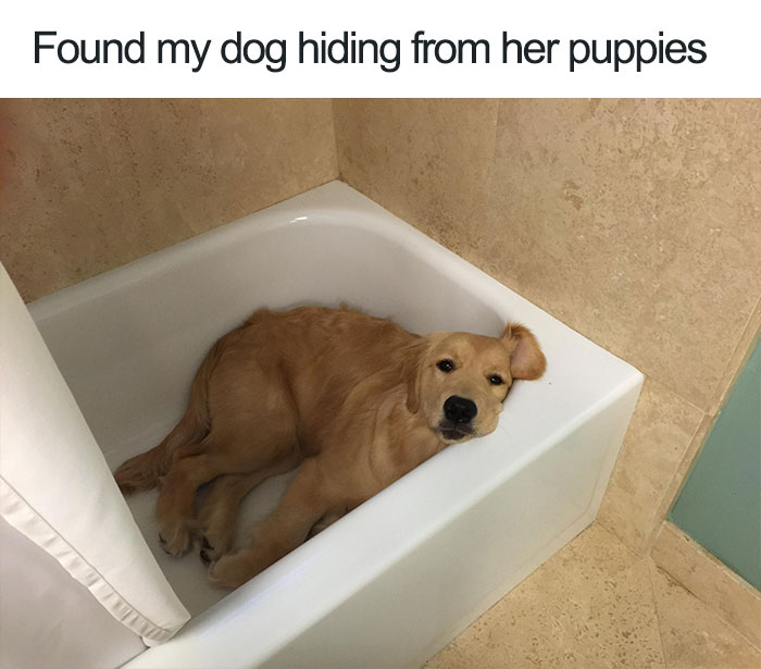 Why Do Dogs Like To Hide Things