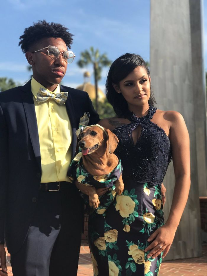 18-Year-Old Makes Her Dachshund A Matching Prom Dress, Wins The Internet