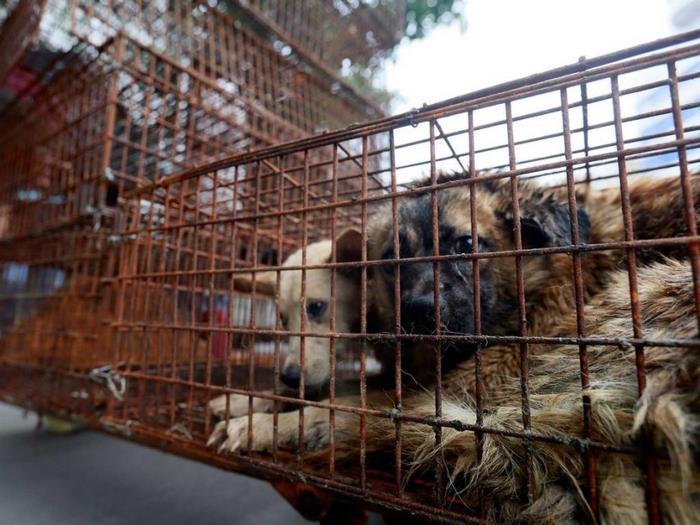 dog-meat-ban-yulin-festival-china- (2)