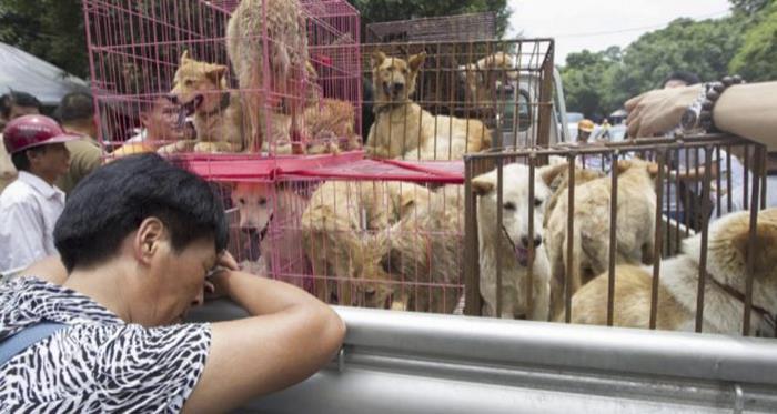 dog-meat-ban-yulin-festival-china- (25)