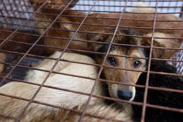 dog-meat-ban-yulin-festival-china- (4)