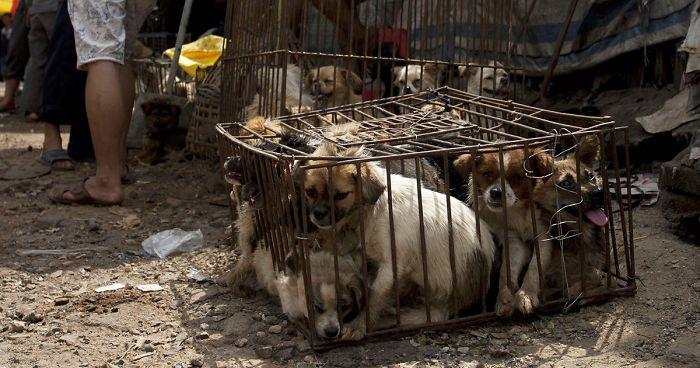 Finalmente se ha prohibido la carne de perro en el Festival Yulin en China