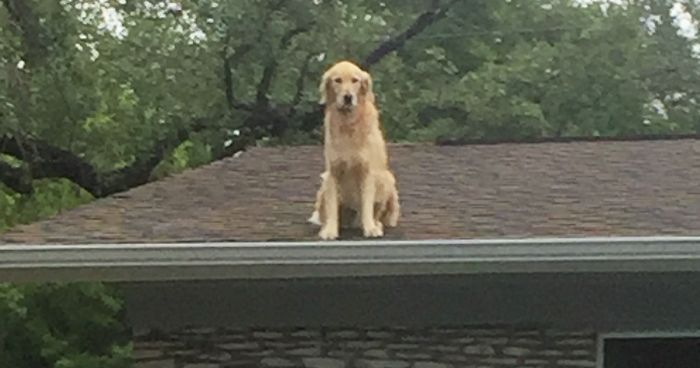 Family Makes Sign To Explain Why Their Dog Is On The Roof, And It Becomes An Internet Sensation