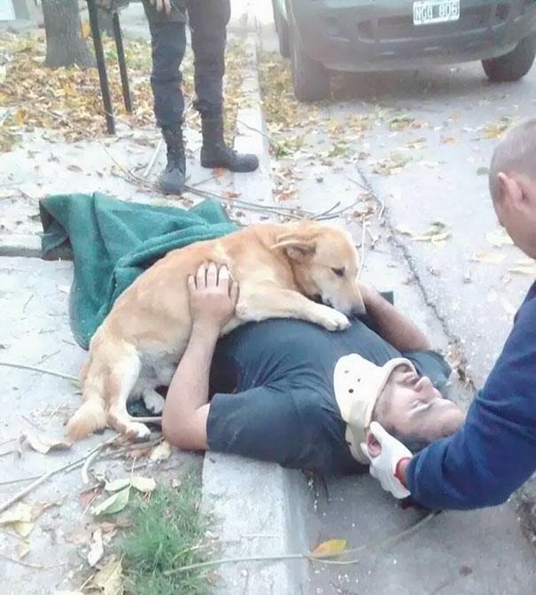 dog-refuses-leave-hugs-injured-owner-tony-argentina-1a