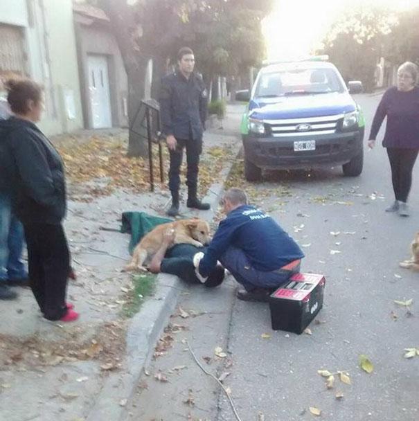dog-refuses-leave-hugs-injured-owner-tony-argentina-4a