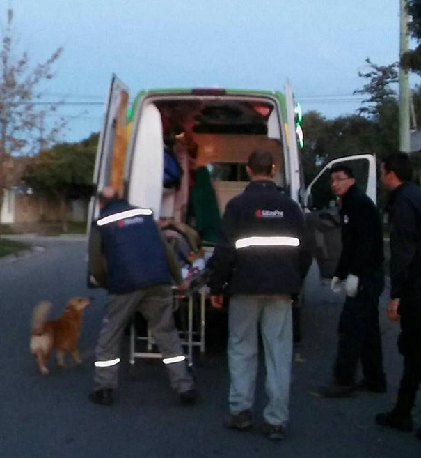 dog-refuses-leave-hugs-injured-owner-tony-argentina-5a