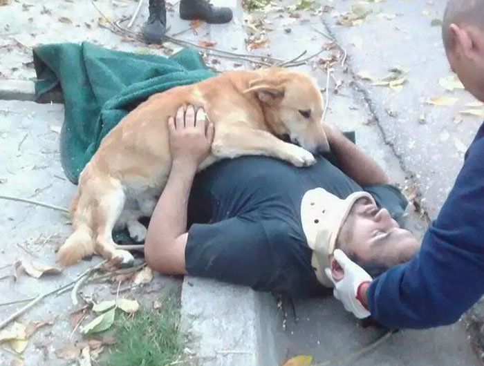 This Dog Refused To Leave His Owner Who Got Injured And Lost Consciousness After A Fall