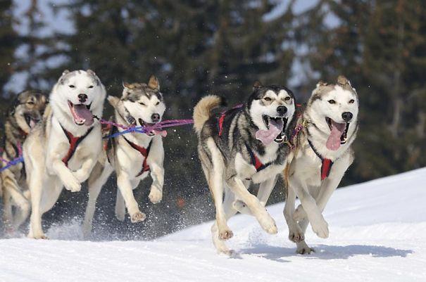 dogSleddingTours-591cbe8aad62b.jpg