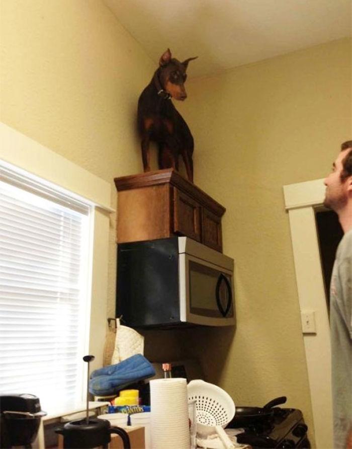 Ha visto un ratón