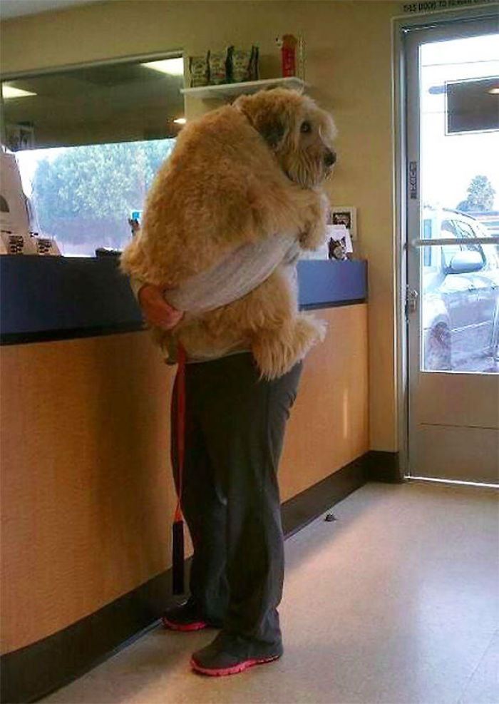 Dijiste que ibamos al parque, no al veterinario