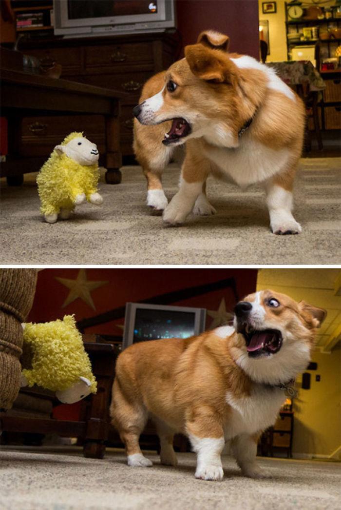Esta oveja de peluche tiene al perro atemorizado