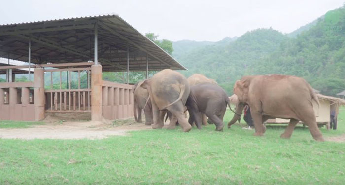 elephants-run-greet-new-rescue-baby-4