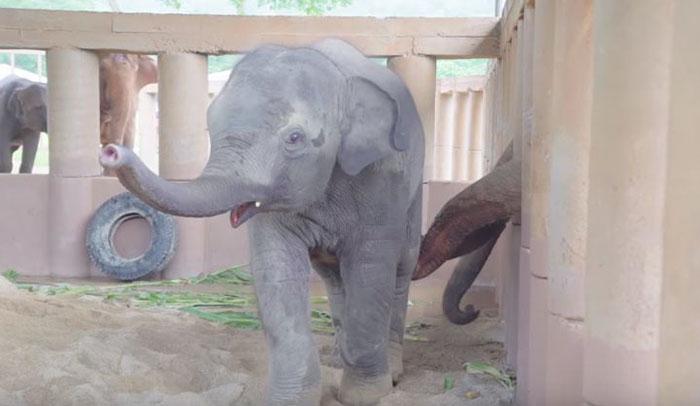elephants-run-greet-new-rescue-baby-5