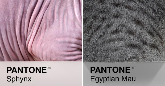 Cat Breeds As Pantone