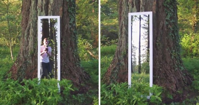 This Illusion Of The Forest Mirror Is Driving The Minds Of The People Crazy.