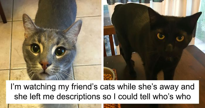 Image of: Wrong Catsitter Shares The Note She Got From The Owner And Its Hilarious Bored Panda Catsitter Shares The Note She Got From The Owner And Its