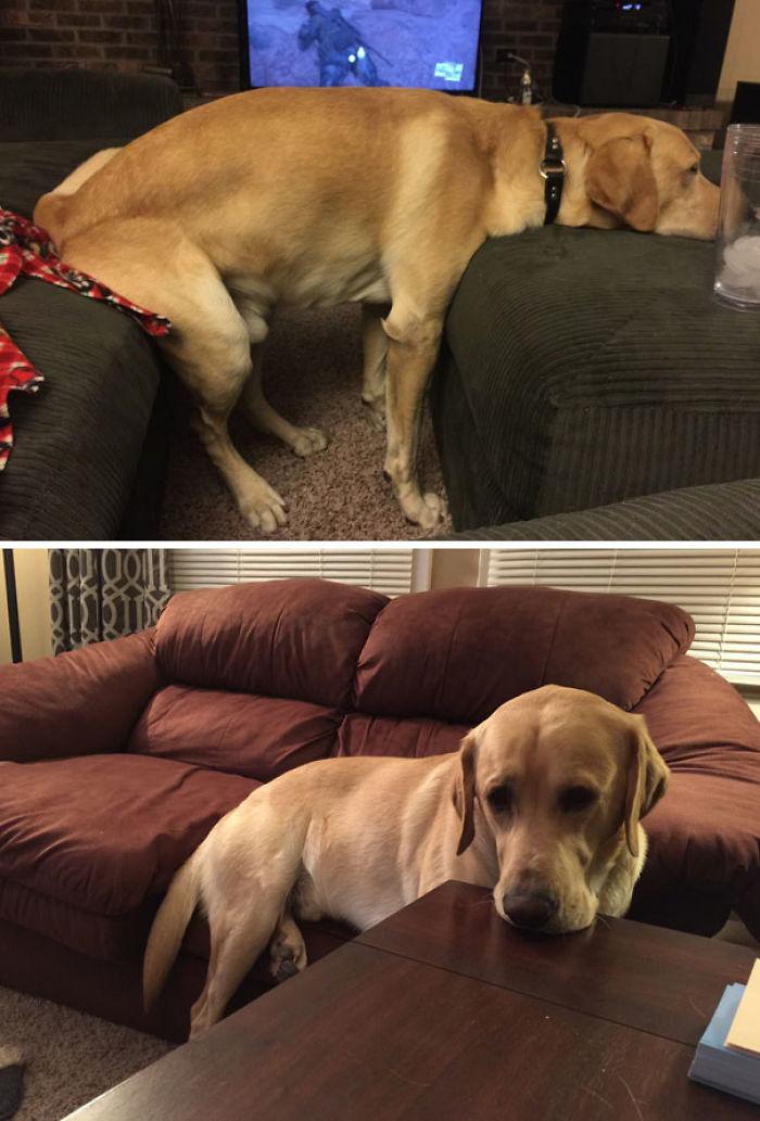 No le dejamos subirse a los muebles, así que se apaña así
