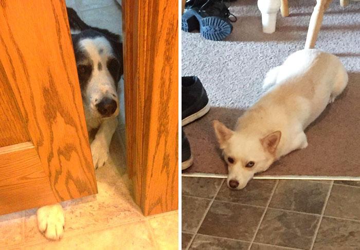 10+ Perros que intentaron reinterpretar las normas humanas y fue tan divertido como adorable