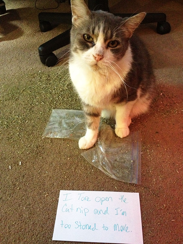 Cat Shaming: Drug Edition