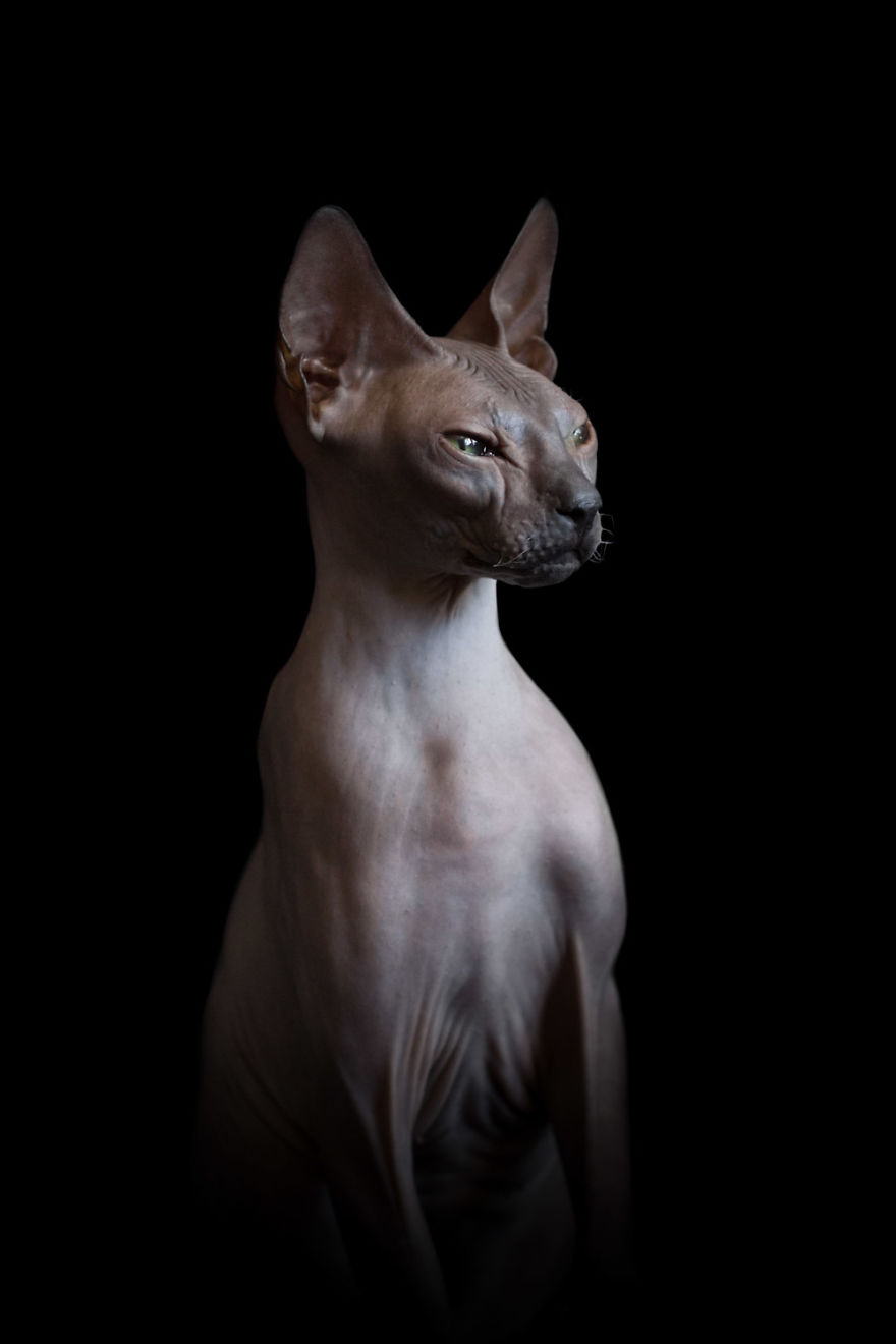 10+ Photos Of Hairless Cats That Will Remind You Of Aliens