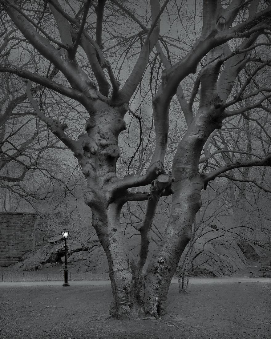 5 A.m., European Beech Tree, 2017