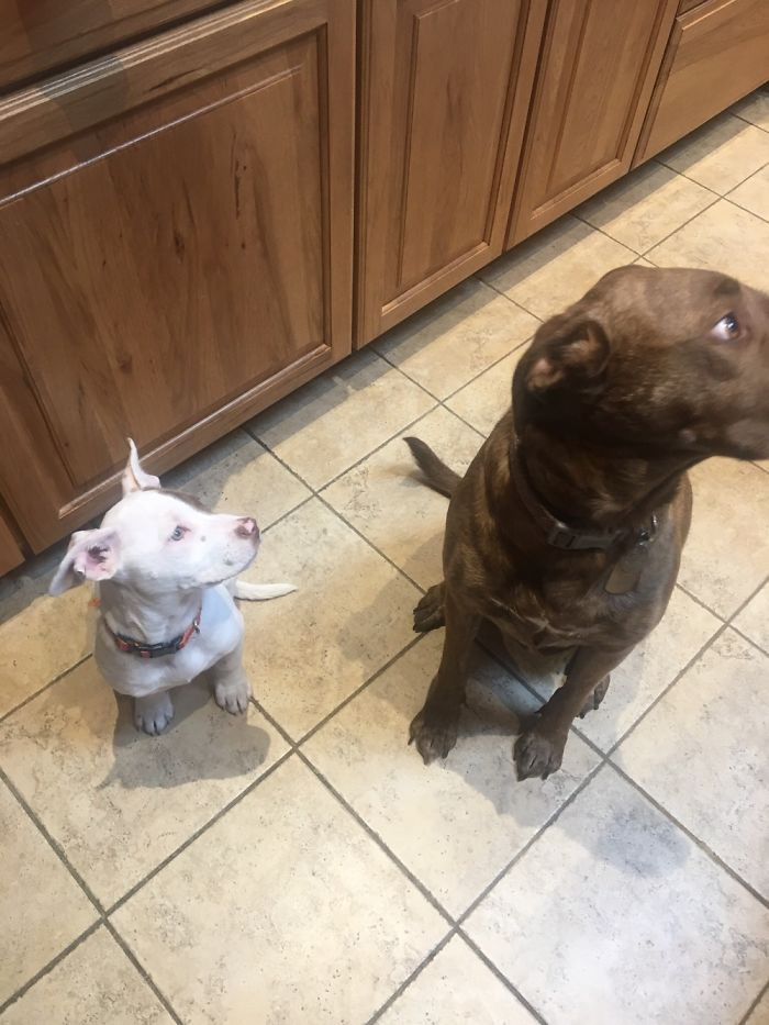 This Is How They Don't Beg For Treats By The Cookie Jar.