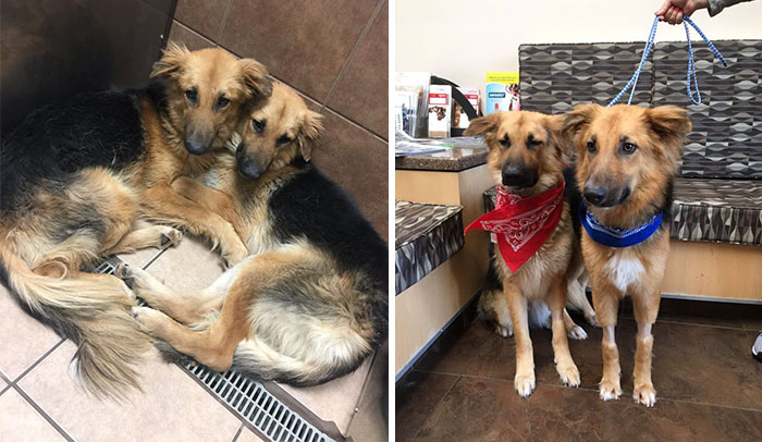 Shelter Dogs Frightened To Be Separated Wouldn't Let Go Of Each Other, So