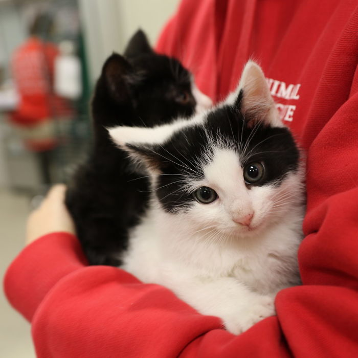 Looking For A Job? This Company Will Pay You For Cuddling With Kittens All Day Long