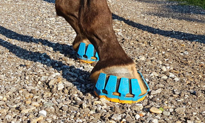 Get To Know The Sneakers That Can Save The Lives Of Thousands Of Horses.