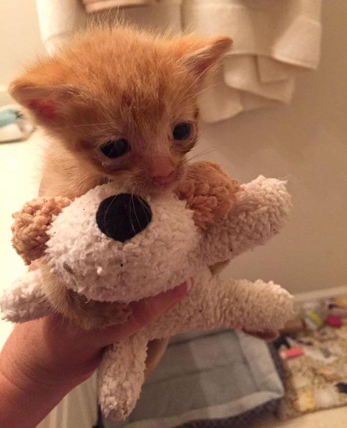 mother-shelter-cat-nurtures-orphan-kitten-ember-flame-11