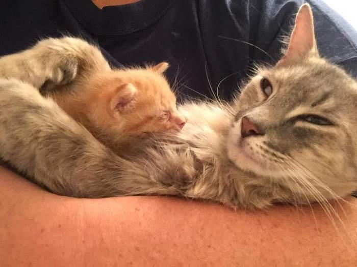 mother-shelter-cat-nurtures-orphan-kitten-ember-flame-6