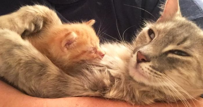 Mother Cat Lost All Her Kittens, Then This Orphan Newborn Showed Up