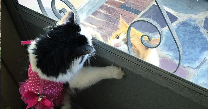 Cat Falls In Love With Girl Next Door, Comes To See Her Almost Every Day For 2 Years